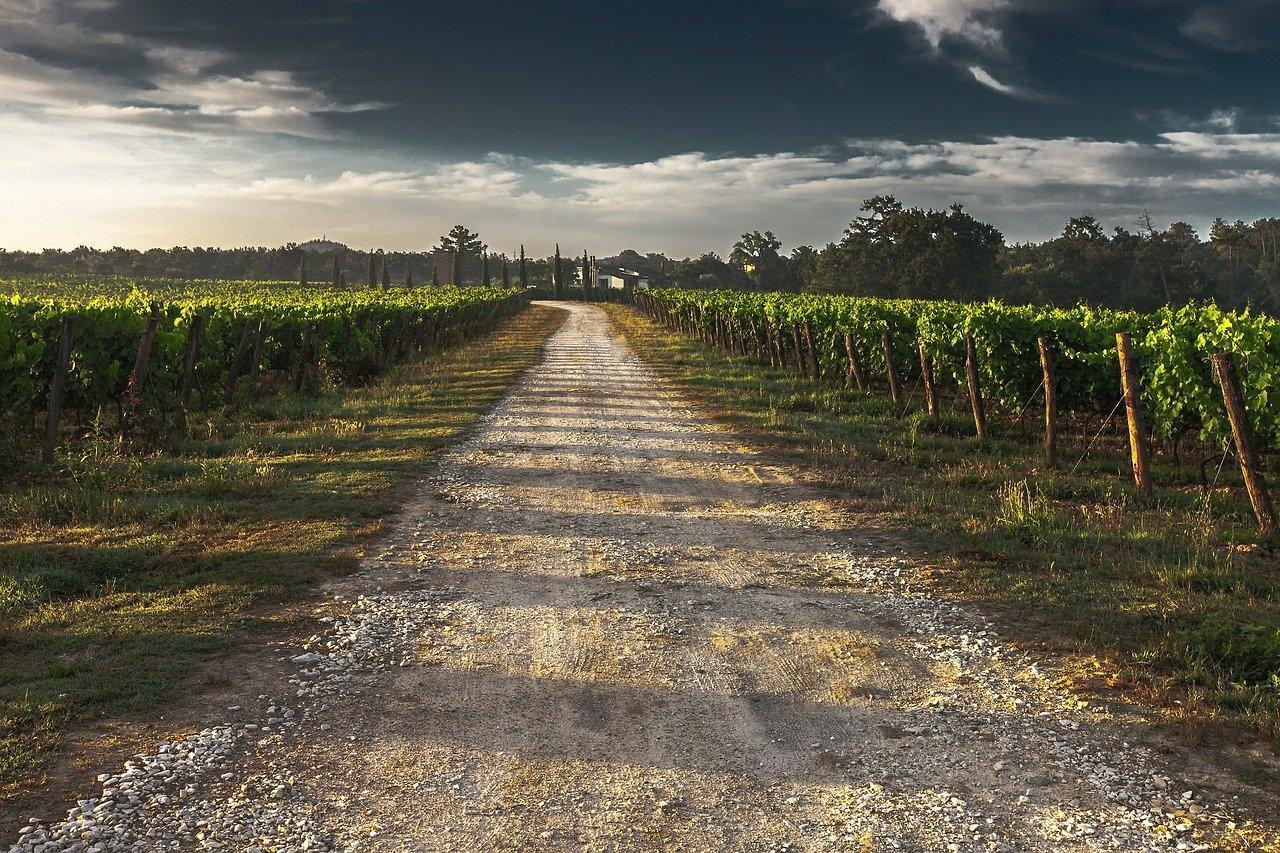 La Junta inicia el pago de 3,4 millones en subvenciones a viticultores y ganaderos de equino afectados por el COVID-19