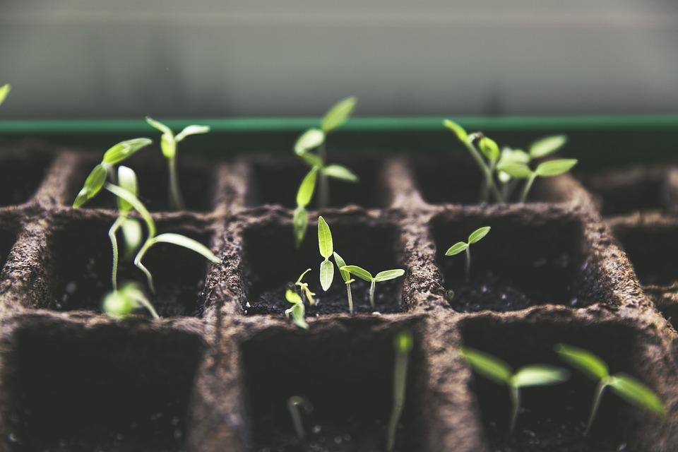 Cultiva las mejores semillas de marihuana y vela por tu bienestar