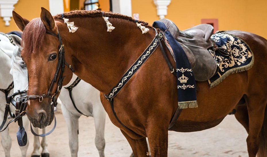 Reluxo, el caballo de la Real Escuela con 26 años que ha recorrido medio mundo