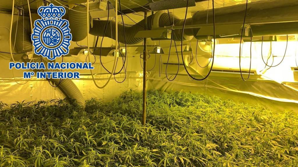La Policía Nacional desmantela una nave en El Portal con 800 plantas de marihuana