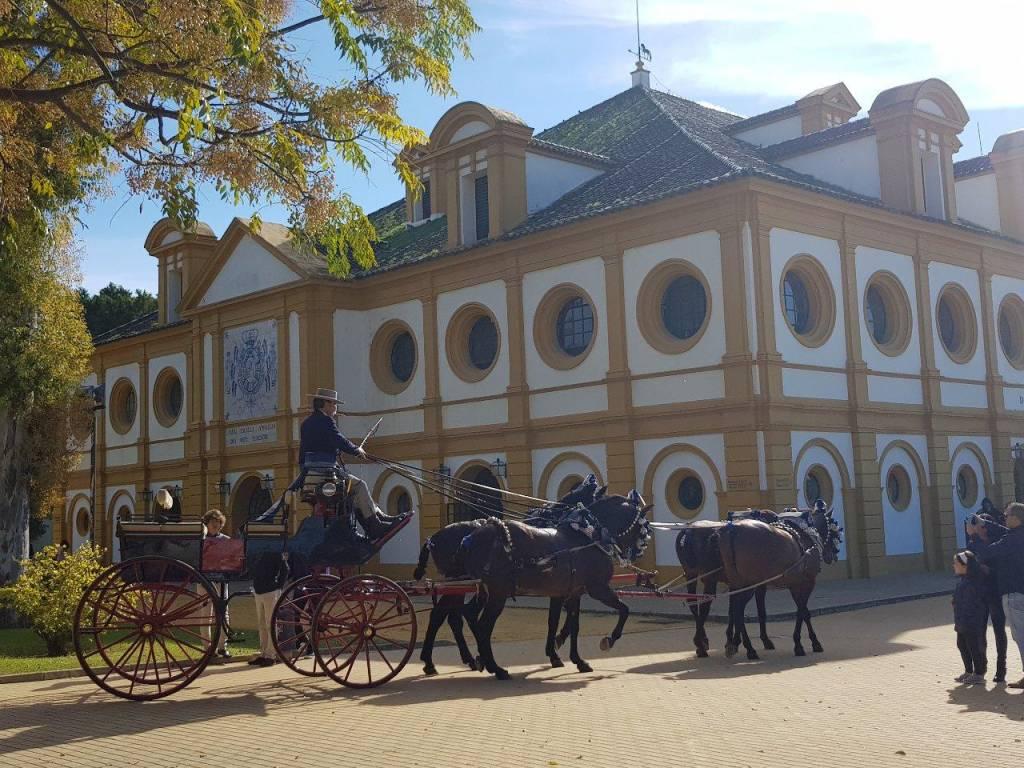 La Real Escuela celebra este lunes el Día Europeo del Caballo con una jornada de puertas abiertas